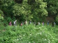 30_ Creuant la selva.JPG