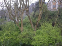 23.03.2009. Imatge dels plàtans on se situa la font.