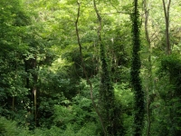 14_La selva.JPG