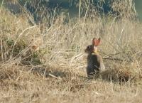 04_El conills son altres companys de cami.jpg
