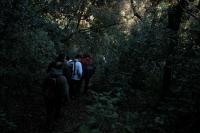 15_Caminant per la selva.jpg