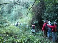 04.- Enmig de la selva.JPG