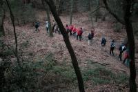 14_Caminant pel bosc.jpg
