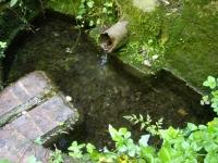 18.04.2009. Imatge de la bassa i el tub.