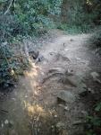 3.- Imatge del camí on es troba la mina.