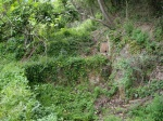 12.05.2012.- Imatge de la font i la gran bassa enmig de l'exuberant vegetació.
