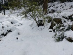 20.03.2018.- Font de la Salamandra nevada.
