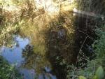 05.12.2006.- Imatge de la bassa.