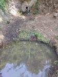 30.06.2018. Imatge general de la font amb la bassa d'amfibis al primer terme.