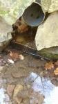 08.01.2019. Imatge del tub i de la bassa d'amfibis.