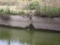 Imatge de com raja la font a l'interior de l'estany.