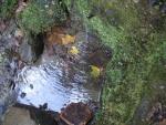 22.10.2015.- Imatge de la bassa i el tub.