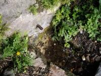 29.03.2008. Imatge del tub i la pica.