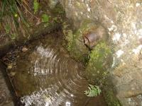15.05.2009. Imatge de la bassa i el tub.