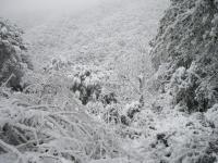 2_Collserola nevat.JPG