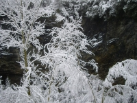 4_Arbres nevats.JPG