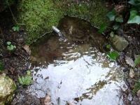 13.03.2010.- Imatge de la bassa i dels tubs.