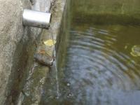 11.08.2007.- Imatge del tub.