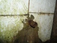 20.10.2007. Imatge del tub.