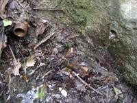 21.02.2010. Imatge dels dos tubs i de la bassa.