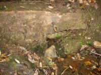 10.01.2010. Imatge del frontal i del tub.