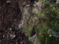 24.03.2013.- Imatge del frontal de la font amb els dos tubs.