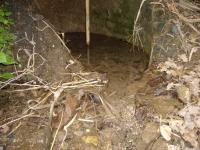 Imatge de l'aiguaneix.