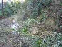 15.01.2011. Imatge de l'aiguaneix i del camí.