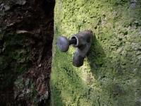 09.08.2009.- Imatge de l'aixeta de polsador.